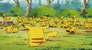 피카츄숲의-피카츄들