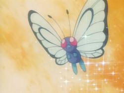 Ash Butterfree Sleep Powder