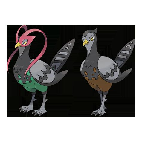 Unfezant   Pokémon Wiki   FANDOM powered by Wikia