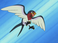 Ash Taillow