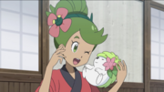 Mallow with Shaymin