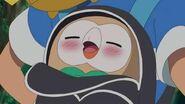 Ash Rowlet sleeping