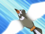 Ash Staravia Wing Attack