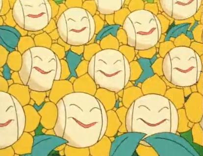 Multiple Sunflora anime