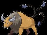 Tauros (Pokémon)