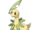Bayleef (Pokémon)