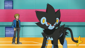Beautiful Luxray