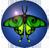 Moth icon 2