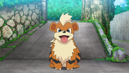Officer Jenny Growlithe