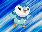 180px-Piplup