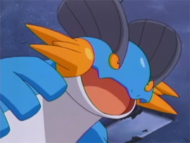 As a newly evolved Swampert