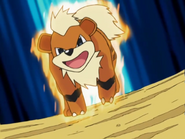 Morrison Growlithe Take Down