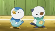 Dawn Piplup and Ash Oshawott