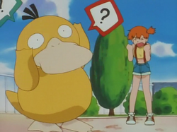 Misty yelling at Psyduck
