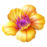 Buddy souvenir tropical flower