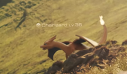 Charizard trailer