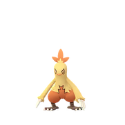 Combusken female