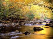 Golden-river-wallpaper