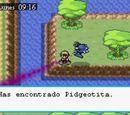 Pidgeotita