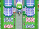 Greenpine Gym