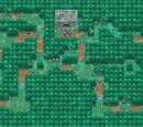 Dullfern Forest