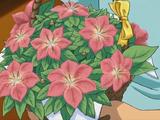 Gracidea (kwiat)