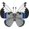 Vivillon-Monsoon