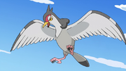 EP692 Ash Tranquill