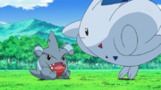 EP641 Togekiss scolding Gible