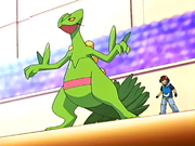 Ash and Sceptile