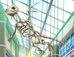 Dragonite Skeleton Anime