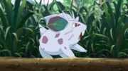 Youngster Nidoran PO
