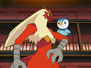 Dawn Piplup May Blaziken