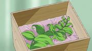 Revival Herb anime