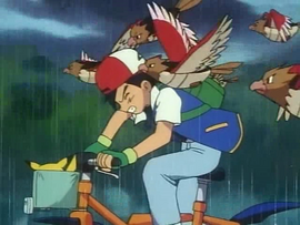 Ash fleeing spearow