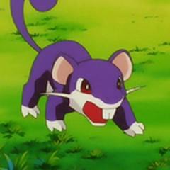 <b>Rattata</b>