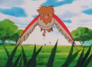 250px-Spearow anime
