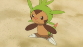 Chespin de Clement no anime XY