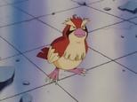Pidgey Temporário de Ash