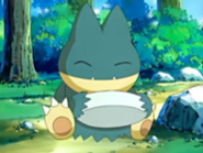 May Munchlax eating