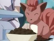 Vulpix comiendo