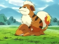 Growlithe vs Charmander