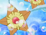 Piper Multiple Staryu