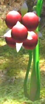 Burgoening spiderwort