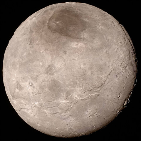A real life photo of Charon for reference