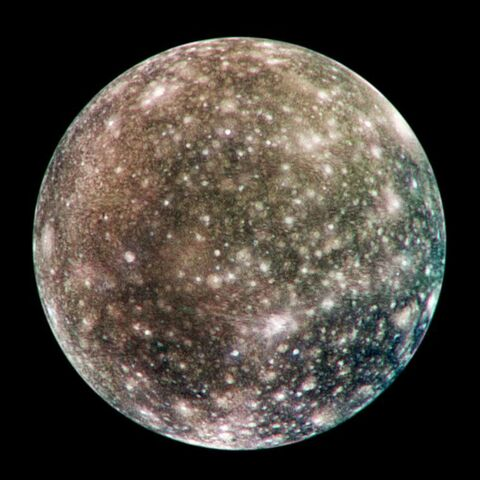 A real life photo of Callisto for reference