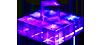 Energon Cubes