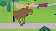 Moose Chasing Stanley