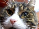 Kot Ogląda