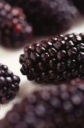 393px-Black Butte blackberry